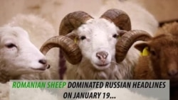 Romanian Sheep Set Off Missile Base alarms