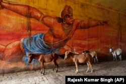 INDIA -- Mules and donkeys stand under an overpass in front of a painting of Hindu God Hanuman in Prayagraj, September 19, 2019