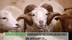 Fact check: A flock of sheep causing security threat to the U.S. military base in Romania